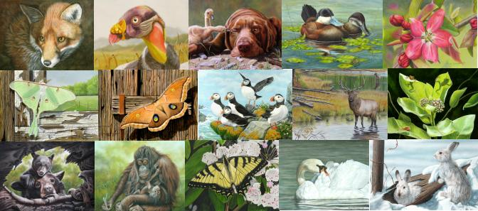 Wildlife Paintings, Flower Paintings, Bird paintings and Nature Art.