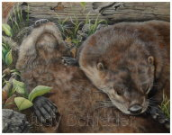 Wildlife Art, Painting of American River Otters by Judy Schrader