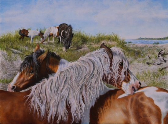 Original Oil Painting of a wild Stallion Pony of Chincoteague, Riptide by Judy Schrader
