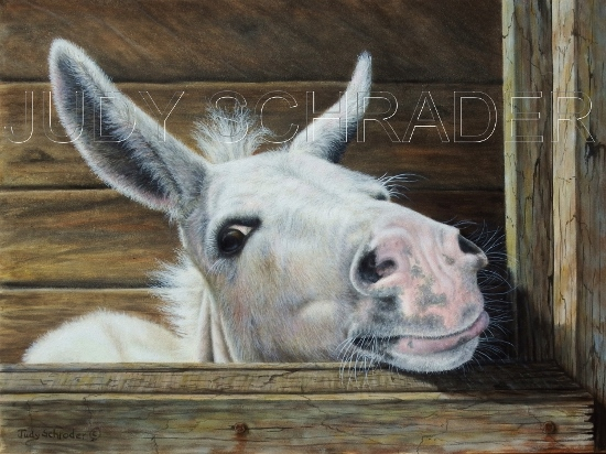 Original oil painting of a little donkey by Judy Schrader