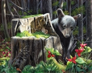 Wildlife Painting of a black bear cub by Judy Schader