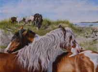 Original Oil Painting of the wild ponies of Chincoteague, horse paintings, pony paintings by Judy Schrader