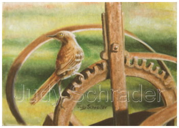 Oriningal Miniature Oil Painting of a Thrasher by Judy Schrader