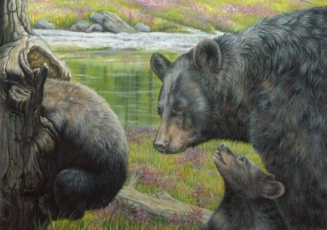 Original oil painting of black bear by Judy Schrader