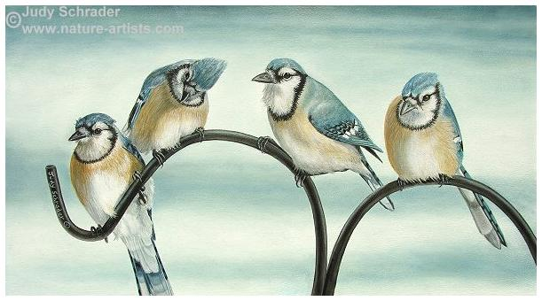 Original painting of blue jays by Judy Schrader