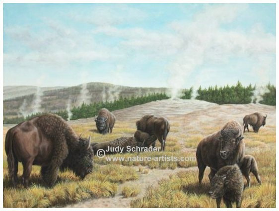 Original Oil Painting of Buffalo at Yellowstone by Judy Schrader