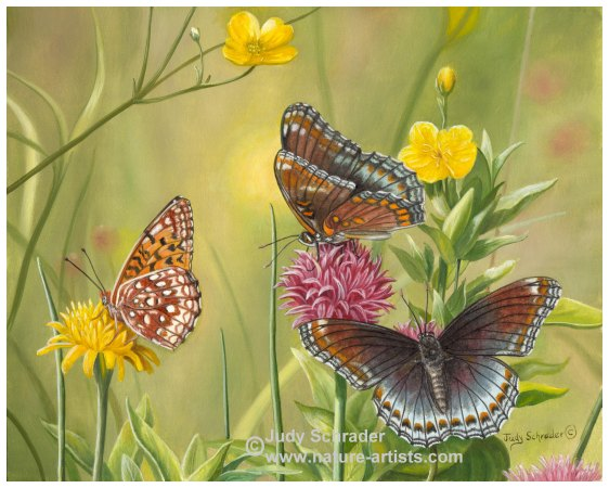 Original Oil Painting of Vevetly Butterflies by Judy Schrader