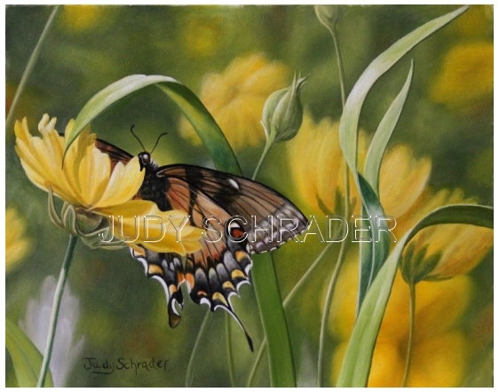 Original Oil Painting of a black swallowtail by Judy Schrader