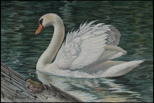 Original miniature oil painting of a mute swan and frog, miniature painting by wildlife artist Judy Schrader