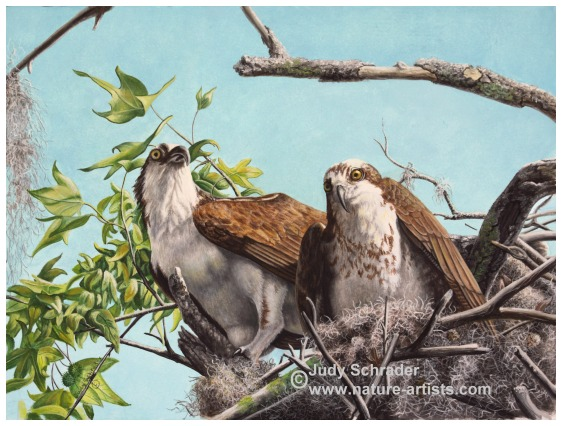 Original Oil Painting of Ospreys by Judy Schrader