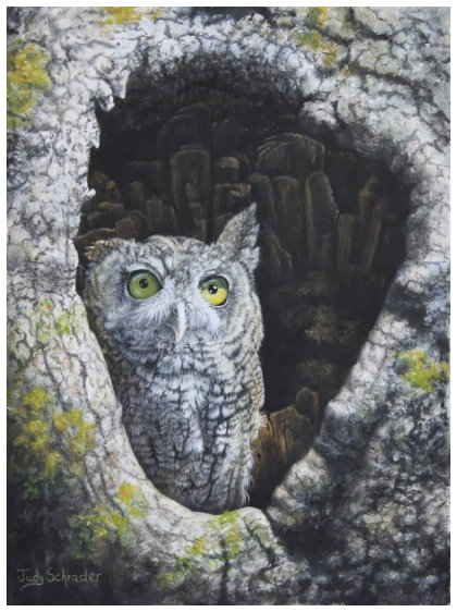 Original Oil Painting of a Screech Owl by Judy Schrader