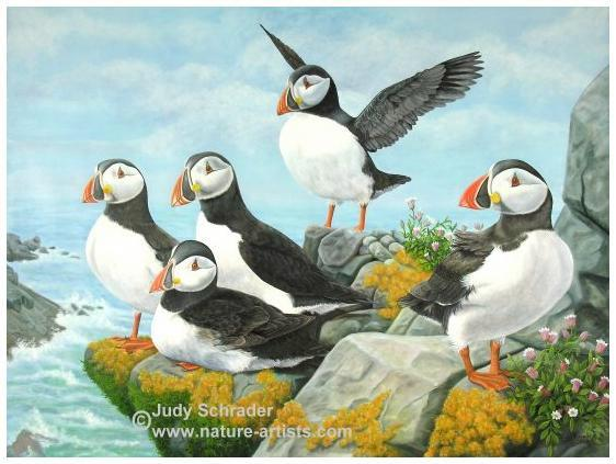 Original Painting of Atlantic Puffins by Judy Schrader