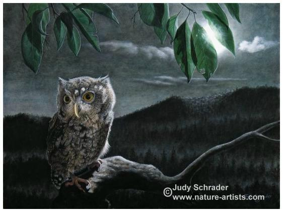 Original Painting of a Screech Owl by Judy Schrader