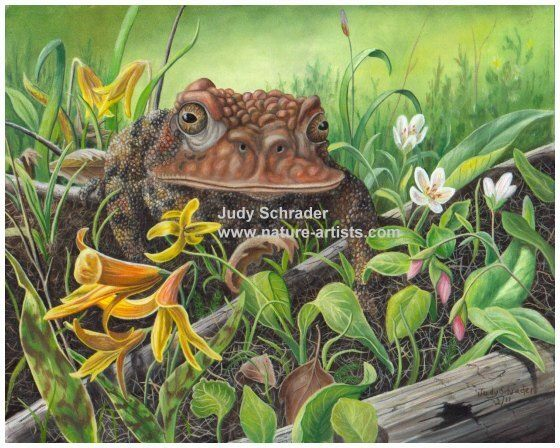 Original Oil Painting of an old toad by Judy Schrader